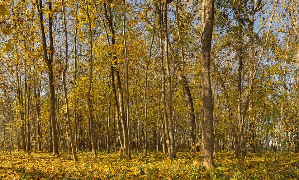 Panoramen der Natur im Herbst