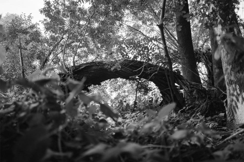 Mittelformat im Wald
